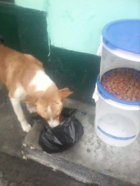 El ingenio del pintor para crear recipientes para comida y agua.  (Foto Prensa Libre: Julio Hernández)