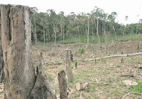 En el país hay un 34.2 por ciento de cobertura forestal y una tasa de deforestación anual de 132 mil 137 hectáreas. (Foto Prensa Libre: Hemeroteca PL)