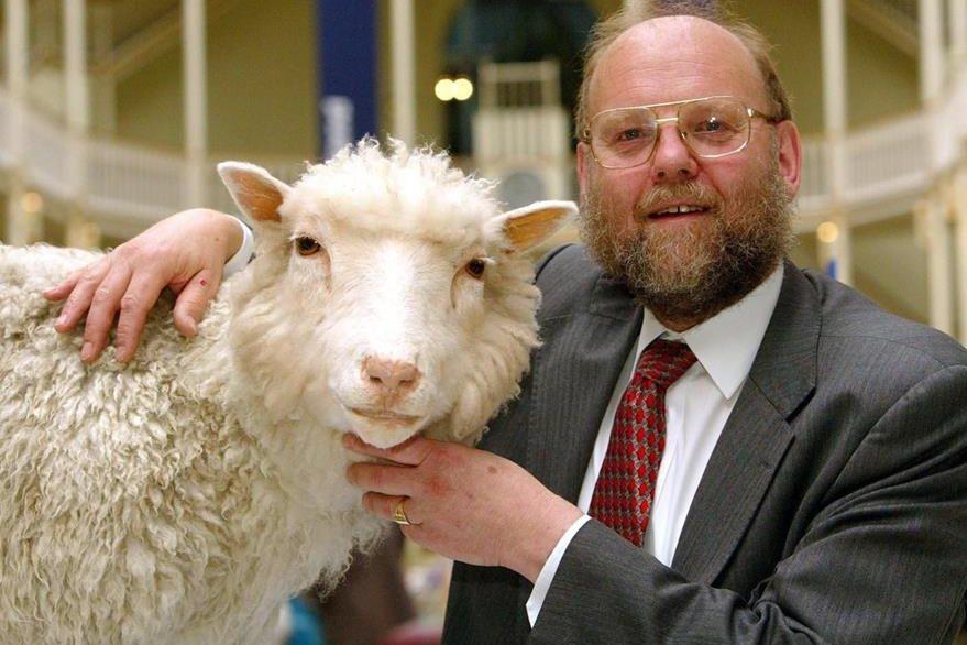 Resultado de imagen para oveja dolly