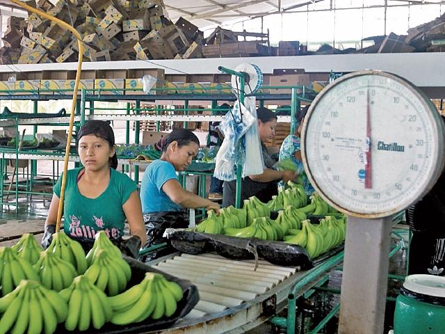Muchos de los trabajadores se emplean en fincas productoras de México. (Foto Prensa Libre: Hemeroteca PL)