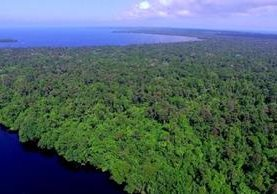 La iniciativa agrupará a los bosques ubicados en el Caribe de Guatemala. (Foto: Fundaeco).