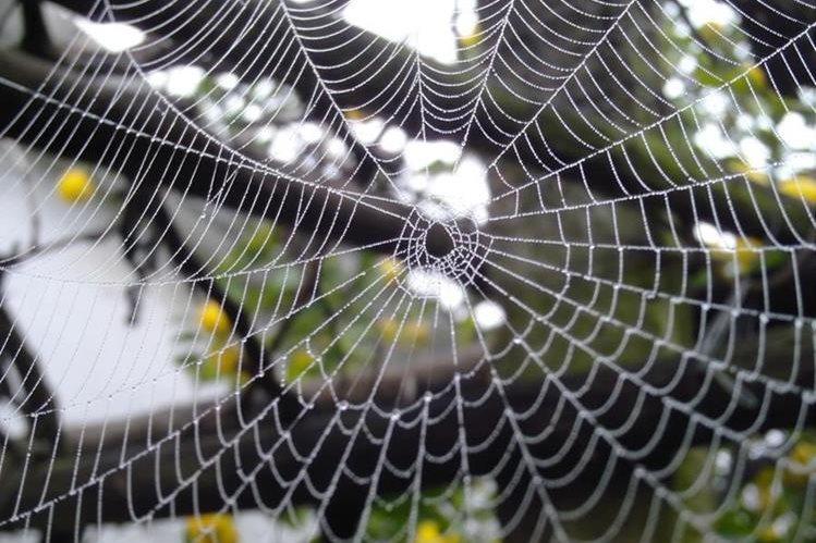Los científicos han dedicado esfuerzos al estudio de este material para generar fibras artificiales con propiedades similares a las de la seda de araña natural.