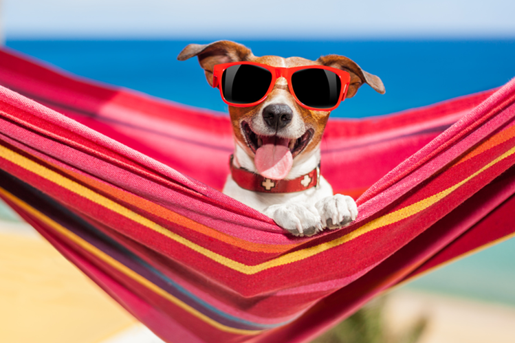 Las mascotas deben quedar en buenas manos cuando la familia sale de vacaciones.