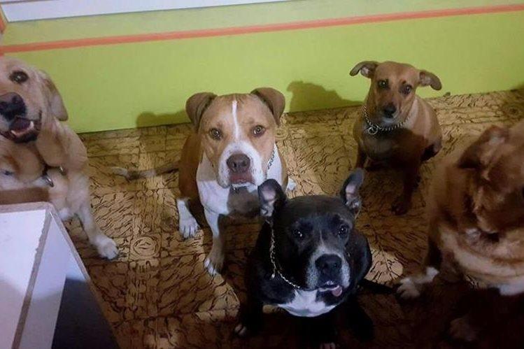 Podrá denunciar el maltrato animal en las municipalidades, comisarías de la PNC o por correo electrónico. (Foto Prensa Libre: Hemeroteca PL)