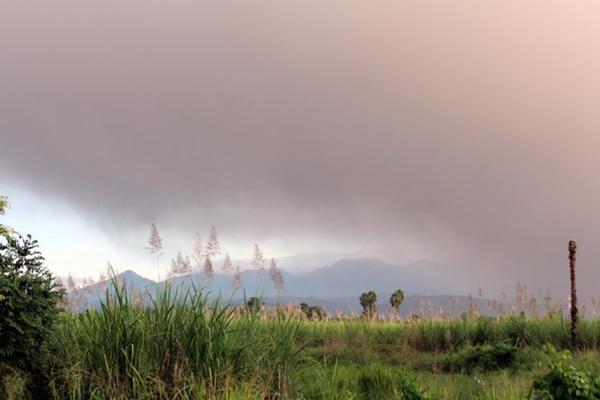<p>Vegetación cubierta por la ceniza. (Foto Prensa Libre: Rolando Miranda)</p>