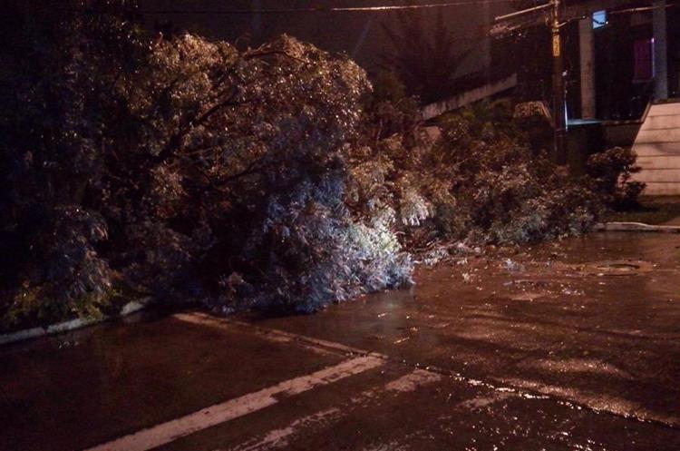 Árbol caído en la colonia La Floresta, zona 7. (Foto Prensa Libre: Santiago Rosales).