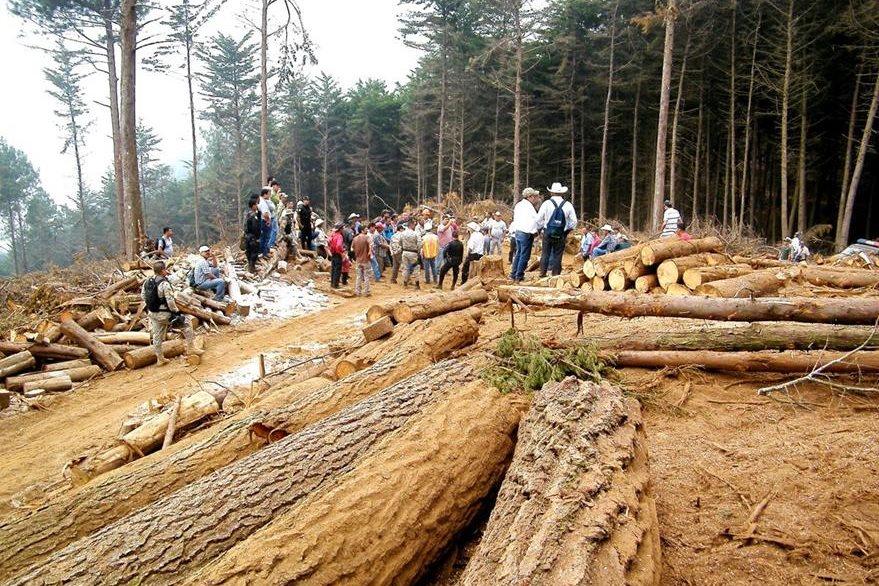 Empresas se dedican al aprovechamiento forestal en la zona. (Foto Prensa Libre: Cortesía)