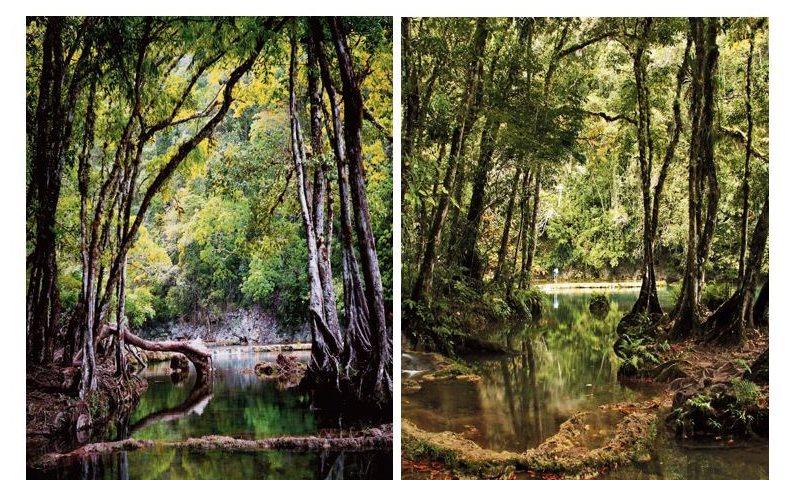 Un sector de las pozas de Semuc Champey captado en 1999 (Izquierda). La misma área del monumento natural de Lanquín, Alta Verapaz, en una imagen captada recientemente. (Fotos Prensa Libre: Hemeroteca)