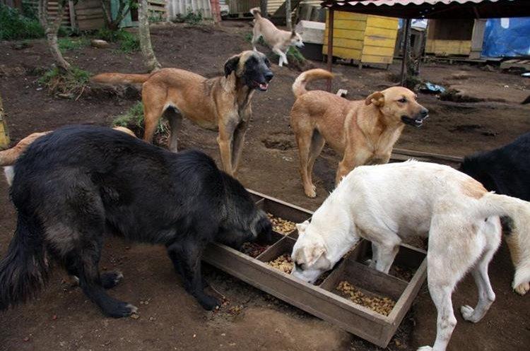 Los canes reciben cuidados y alimentación adecuada en el refugio Entiende Mi Silencio. (Foto Prensa Libre: Renato Melgar).