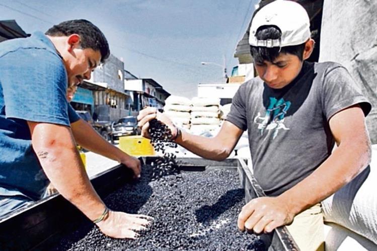 Las cosechas de frijol terminaron en Petén, el mayor abastecedor de granos del país.