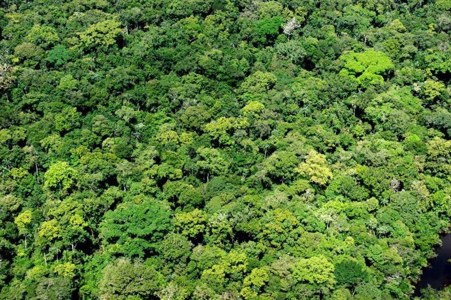 La espesa selva de Chocó es un lugar muy húmedo y con gran presencia de las fuerzas rebeldes de las Farc y del ELN. (Foto: Internet).