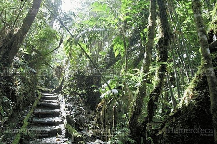 Biotopo del Quetzal en Baja Verapaz. (Foto: Carlos Sebastián 2010)