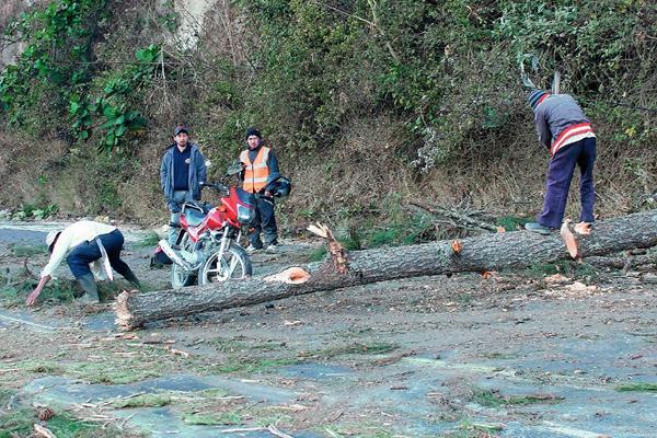 La motocicleta del afectado quedo cerca del árbol que desconocidos botaron con motosierra, en Sumpango, Sacatepéquez. (Foto Prensa Libre: Víctor Chamalé)