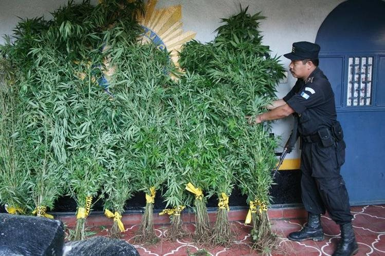 La iniciativa de Ley que busca legalizar el consumo de marihuana la presentó el diputado Álvaro Velásquez. (Foto Prensa Libre: Hemeroteca)