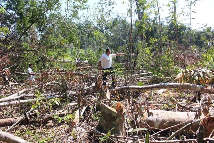 Encargados de velar por la protección del medioambiente aseguran que empresarios beliceños depredan los bosques de maderas preciosas en el área fronteriza con Guatemala. (Foto Prensa Libre: Rigoberto Escobar)