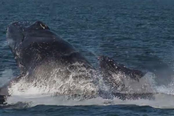 <p>Avistamiento de ballenas en Las Lisas.</p>