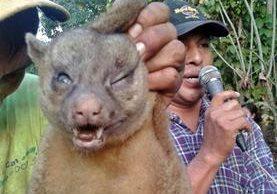 Vecinos de San Rafael Pacayá 2, Coatepeque, muestran cadaver de animal que creen que era el cadejo. (Foto Prensa Libre: Alexánder Coyoy)