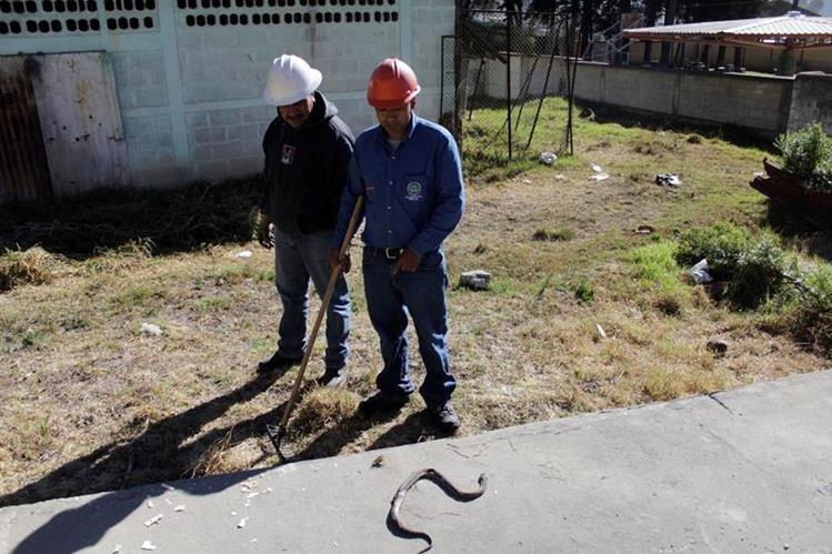 Trabajadores de la empresa eléctrica municipal muestran a la serpiente que murió por el incendio. (Foto Prensa Libre: María José Longo)