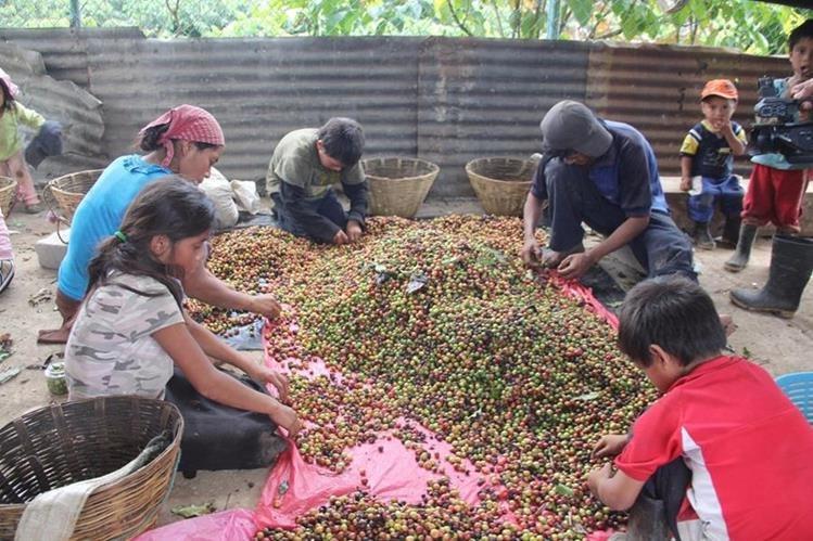 Autoridades mexicanas descubrieron que niños guatemaltecos son explotados en fincas de café en Chiapas, México. (Foto Prensa Libre: Juan M. Blanco, Quadratín, Chiapas)