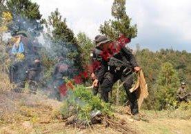 Agentes de la PNC queman plantación de marihuana en Coatepeque, Quetzaltenango. (Foto Prensa Libre: Alexánder Coyoy)