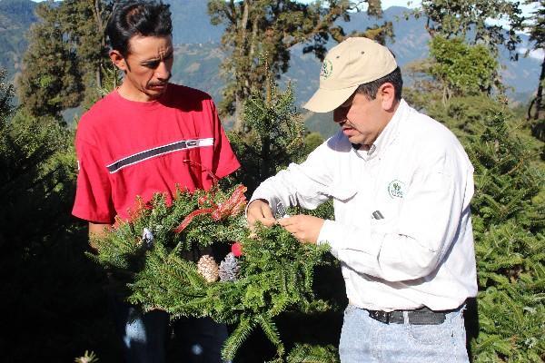 Sergio Osorio, del Inab, coloca  el marchamo  a una  corona de pinabete.
