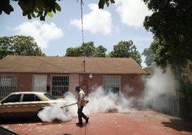 La fumigación terrestre se realiza desde hace semanas.(AFP):
