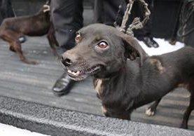 Los dos perros recibirán atención veterinaria a causa de las lesiones e infecciones que sufren. (Foto: Tomada del muro Neto Bran/Facebook)