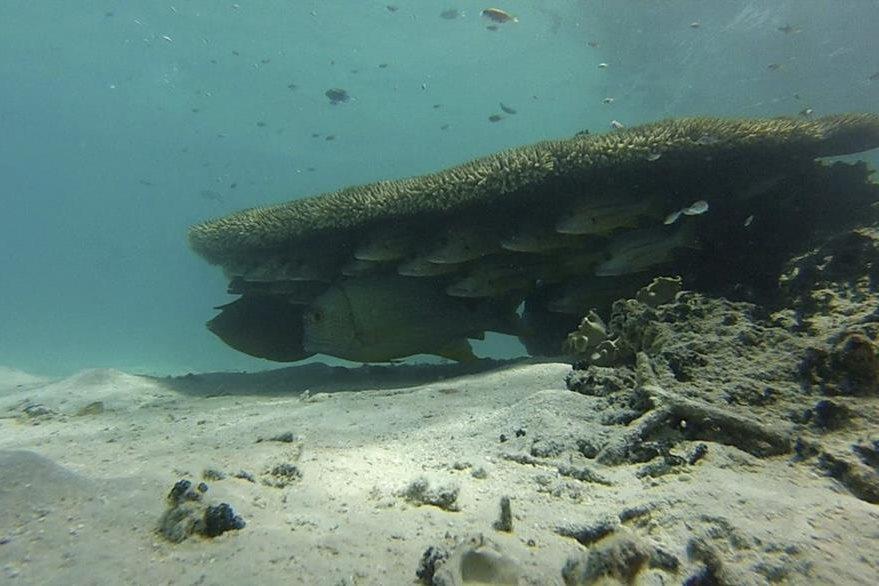 En el peor de los escenarios, el estudio advierte de que los peces emigrarán un 65% más rápido, lo que traerá consecuencias para la biodiversidad y el funcionamiento de los ecosistemas.(Foto Prensa Libre: EFE).
