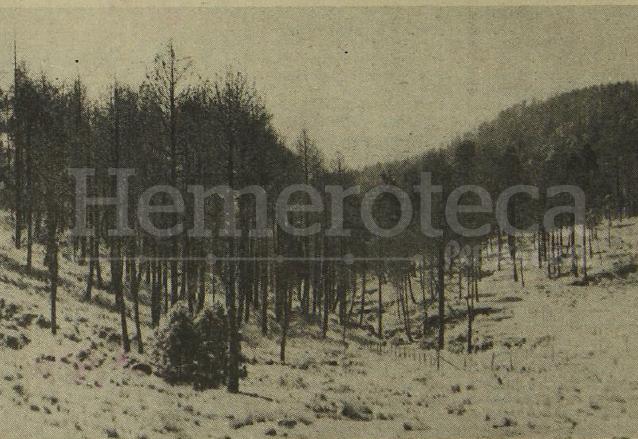Varios árboles afectados que serían talados en Totonicapán en 1979. (Foto: Hemeroteca PL)