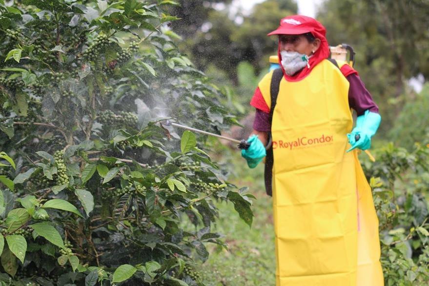 Carmelina Ramos rocía con pesticida una plantación de Café en San Antonio Huista, Huehuetenango. (Foto Prensa Libre: Mike Castillo)