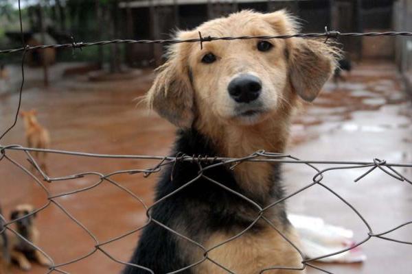 <p>Las autoridades taiwanesas encontraron  unos 400 penes secos de perros. (AFP).<br></p>