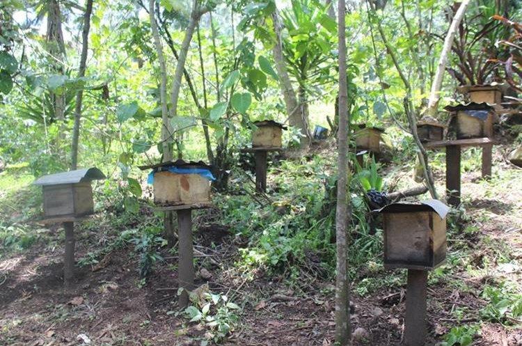 Apiario de Francisco Mendoza Coc, en la cuenca del Lago de Atitlán. Los enjambres están identificados por la raza de abejas. (Foto Prensa Libre: Ángel Julajuj)