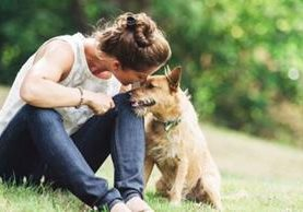 Que los perros tienen un sentido del olfato mejor que el nuestro es una idea ampliamente aceptada pero que no tiene base científica, asegura el estudio. (GETTY IMAGES).