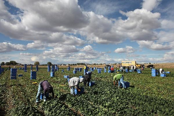 Miles de guatemaltecos que viven y trabajan en Estados Unidos buscan documentarse.