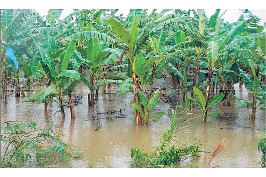 24/10/2008 Plantaciones de banano fueron destruidas por el agua. (Foto: Hemeroteca PL)