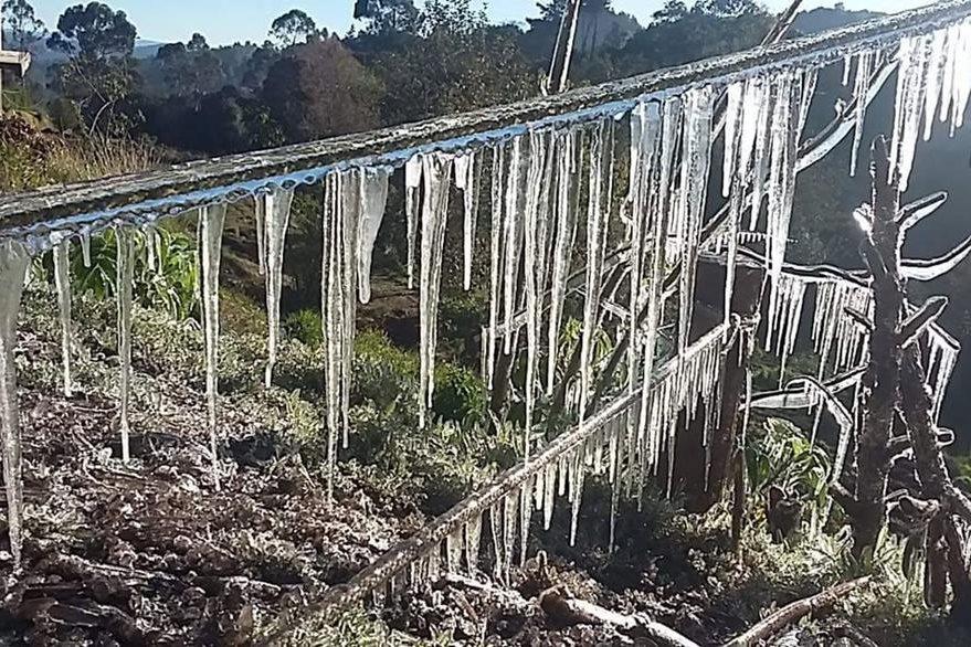 En el altiplano de San Marcos, algunas ramas de árboles amanecieron congeladas. (Foto Prensa Libre: Cortesía Canal 9 Digital)