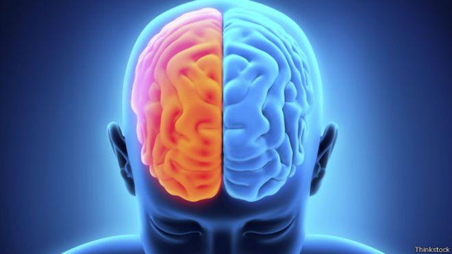 Los investigadores determinaron que los adultos tenían proporcionalmente un 12.6 por ciento más de materia cerebral en el giro fusiforme que los niños.