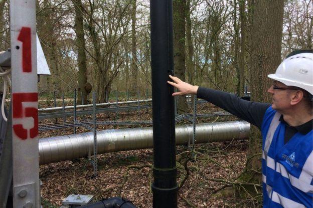Mackenzie cree que varios factores como, por ejemplo, el aumento de la temperatura, limitarán la capacidad de absorción de los árboles. GETTY IMAGES