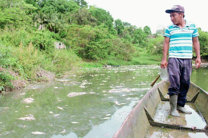 Un pescador observa los peces muertos en el río La Pasión. (Foto Prensa Libre: Hemeroteca PL)