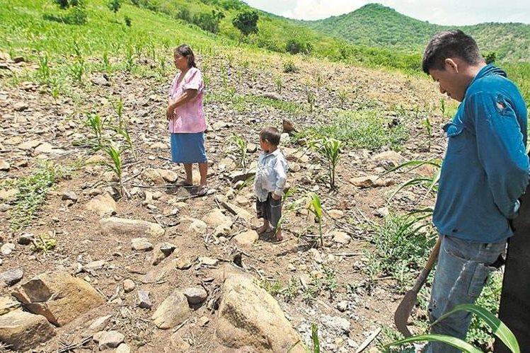 La delegada de la ONUY viajó a regiones del Corredor Seco de Honduras para ver de primera mano el impacto del cambio climático (Foto Prensa Libre: Hemeroteca PL)