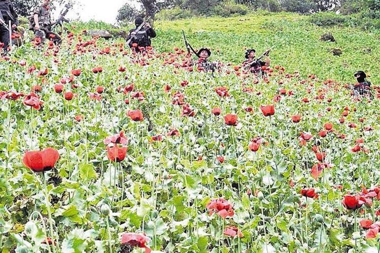 La despenalización de la droga incluye temas como cultivo, consumo y tráfico. (Foto: Hemeroteca PL)