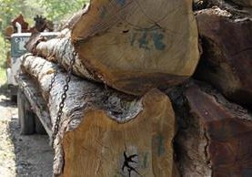 Autoridades indican que en Petén persiste la tala ilegal de árboles.(Foto Prensa Libre: Hemeroteca PL)