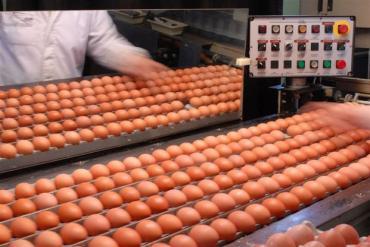 Argentina cuenta con certificado sanitario para exportar huevos a EE.UU.