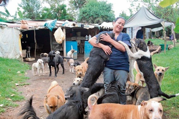 Al igual que los humanos, los perros y gatos necesitan alimentación, vivienda, salud, amor y protección.