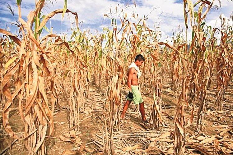 La región centroamericana es afectada por una prolongada sequía. (Hemeroteca PL)