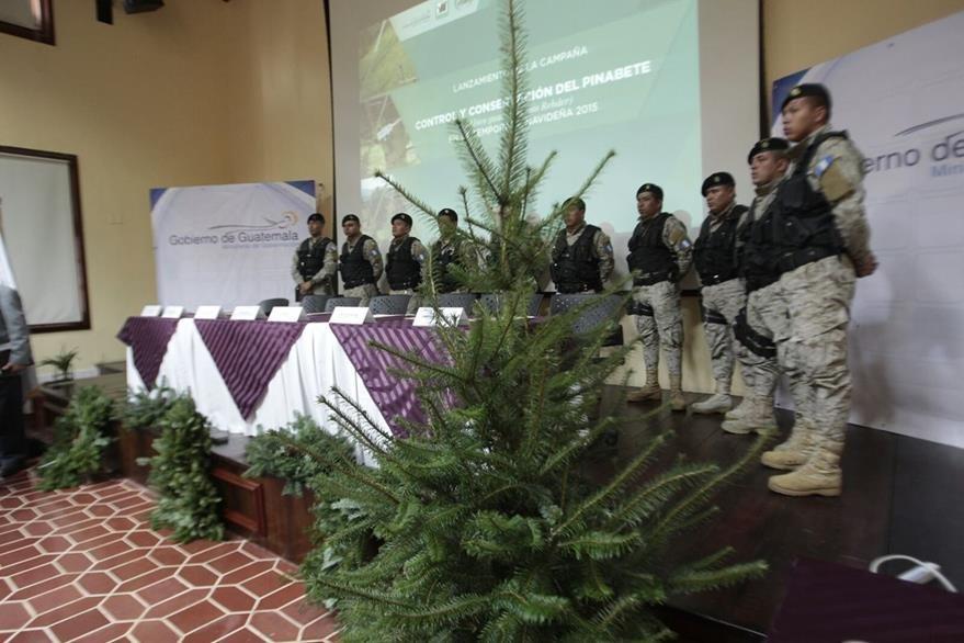 Policía vigilará tala ilegal de  abeto Abies guatemalensis, cuya especie está en peligro de extinción. (Foto Prensa Libre: É. Ávila)