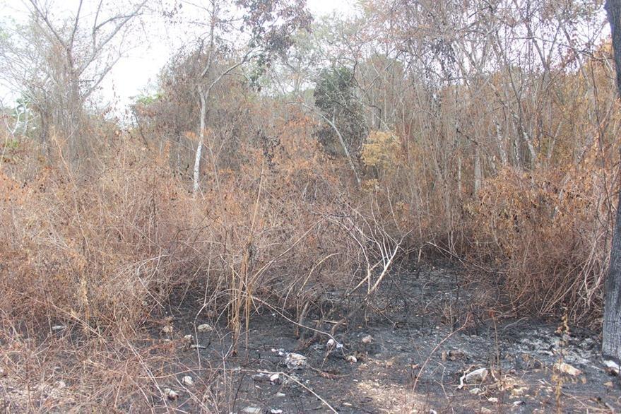 Zona afectada por incendios en San Benito. (Foto Prensa Libre: Rigoberto Escobar).
