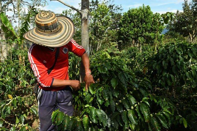 Expertos que se reunirán en Colombia buscan mejorar la producción del café a escala mundial. (Foto: Hemeroteca PL)