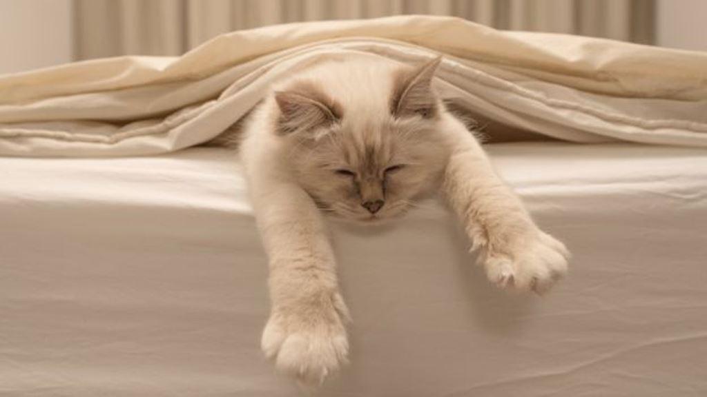 Los gatos empezaron a convivir con el hombre cuando éste vio su utilidad para cazar ratones. THINKSTOCK