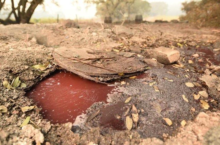 Insólito: Periodistas describen literalmente ríos de vino en los viñedos californianos consumidos por las llamas. (Foto Prensa Libre: AFP)
